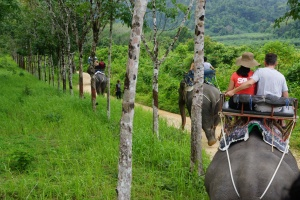 Ride Elephants in Thailand