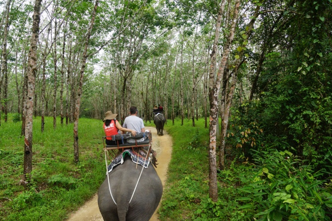 Elephant Riding in Kao Lak, Thailand